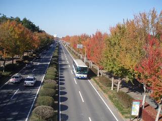 TsukubaNamiki1.jpg