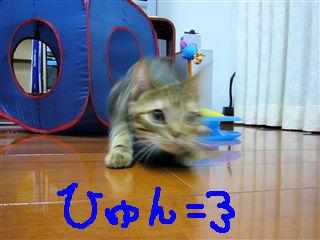 P1030823_R.jpg