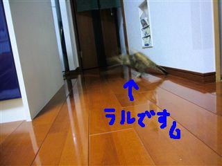 P1030881_R.jpg