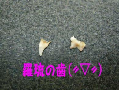 P1050789_R1.jpg
