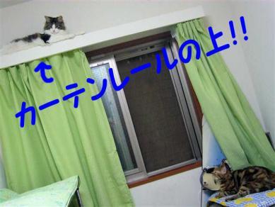 P1050946_R.jpg