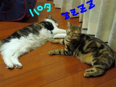 P1060041_R.jpg