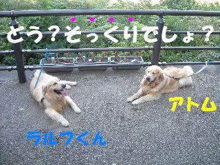 20070815181059.jpg