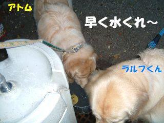 20070815183724.jpg