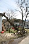 katakatahouseと柳の木