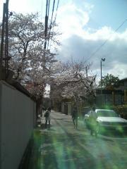 20070403桜
