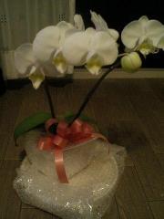20070501 花