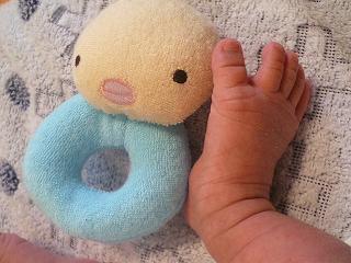 生後4週のしゅうとの足