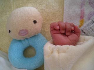 生後4週のしゅうとの手
