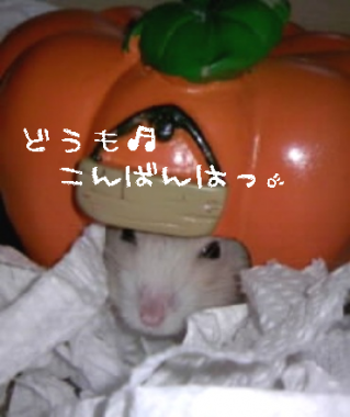 20070921033024.png