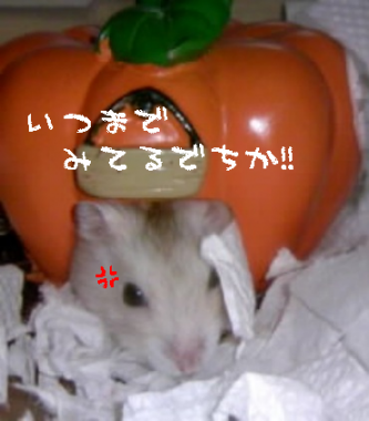 20070921033049.png