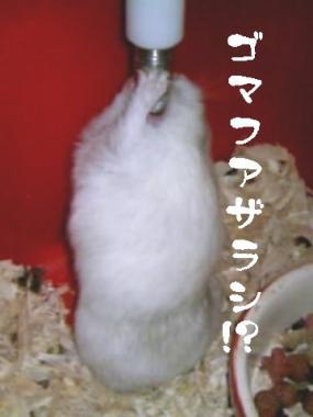 20070927025217.jpg