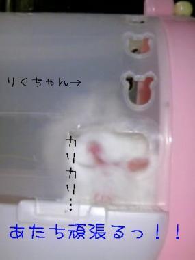 20071012023243.jpg