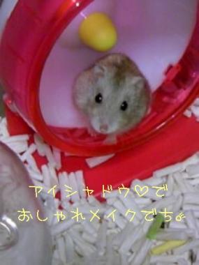 20071105090110.jpg