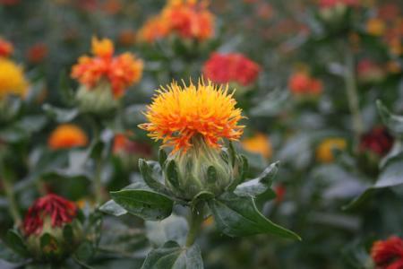 桶川のべに花