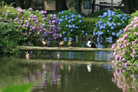 烏ヶ森公園の夏