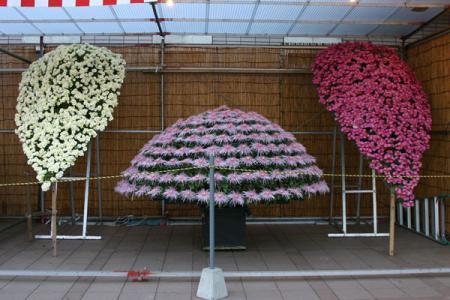 きらら館の菊