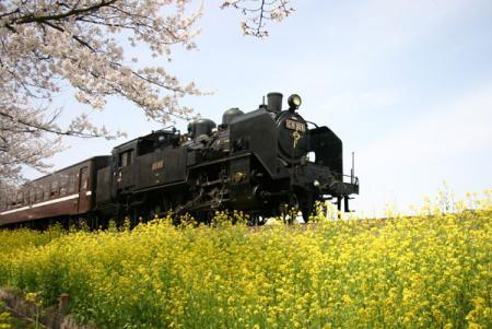 北真岡駅周辺の桜