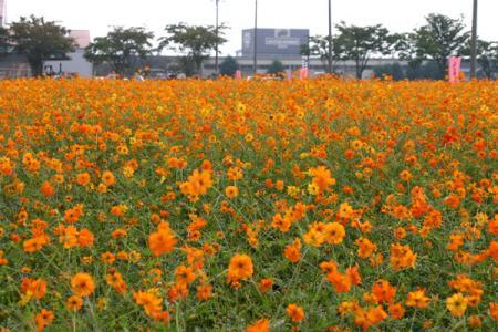 にった花トピア2006