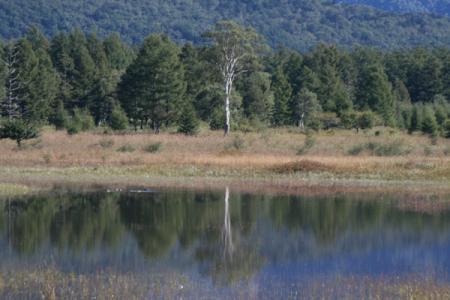 小田代ヶ原の池