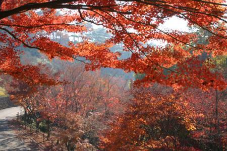 織姫公園の紅葉