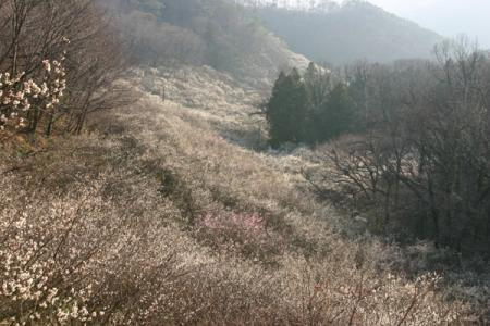 西渓園の梅