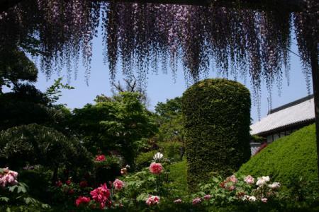 大慶寺牡丹園