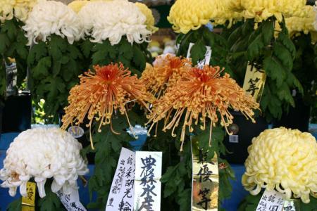 栃木市菊花展