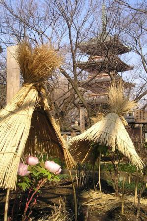 上野東照宮冬牡丹