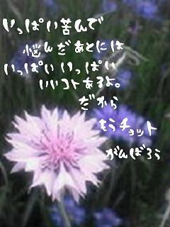 image1803217.jpg