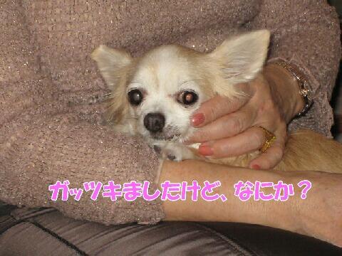 IMG_0509-1.jpg