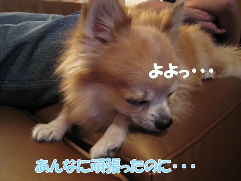 IMG_0510-1.jpg