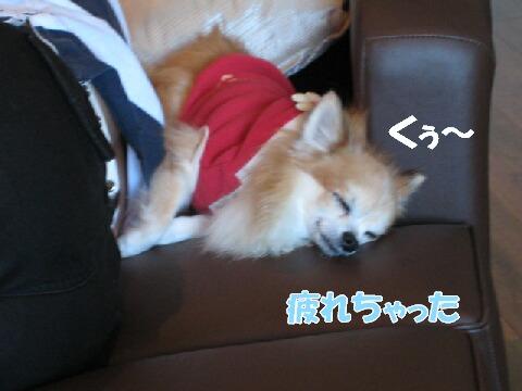 IMG_0526-1.jpg
