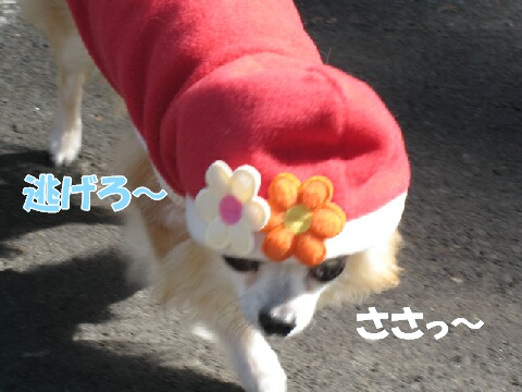 IMG_0528-1.jpg