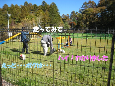 IMG_0533-1.jpg