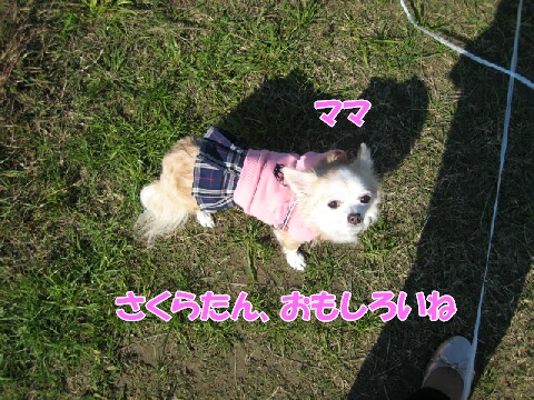IMG_0583-1.jpg
