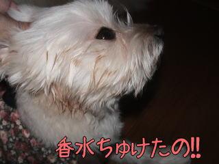 20070110_3.jpg