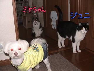 20070110_4.jpg