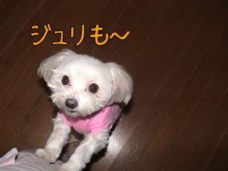 20070110_5.jpg