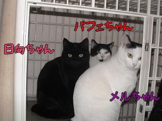 20070110_6.jpg