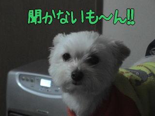 20070113_4.jpg