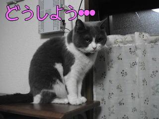 20070122.jpg