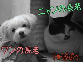 20070122_3.jpg