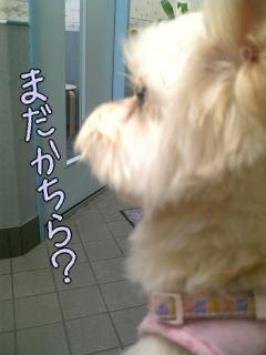 20070123_3.jpg