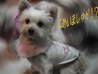 20070124_3.jpg