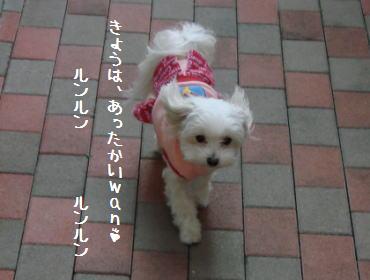 20070130_7.jpg