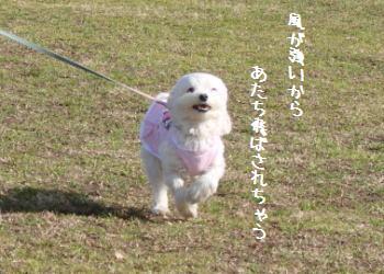 20070204_10.jpg