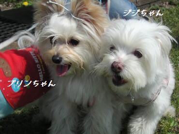 20070207_5.jpg