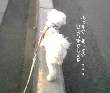 20070212_5.jpg