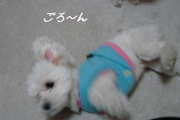 20070216_8.jpg
